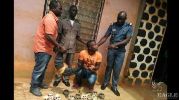 2 traffickers arrested with 6 gorilla skulls