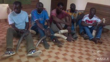 5 ivory traffickers arrested with 4 tusks