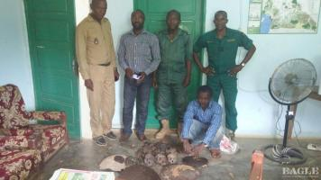 A trafficker arrested with 4 chimpanzee skulls and other contraband