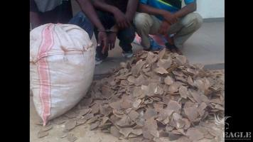 3 traffickers arrested with 70 kg of pangolin scales