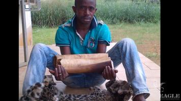 A trafficker arrested with 3 pieces of ivory and leopard skin